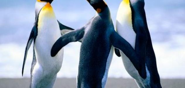 servizi_penguins_16.jpg